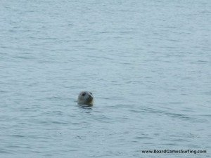 Stand up Paddle boarding along the Pembrokeshire coast with atlantic grey seals